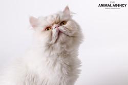 Animal Agency_Max-66.jpg