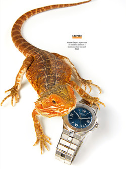 Esquire SHOOT lizards 4 (1)