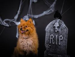 Xena Halloween