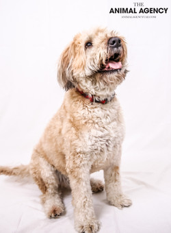 The Animal Agency UAE_Dog_Remy (4).jpg