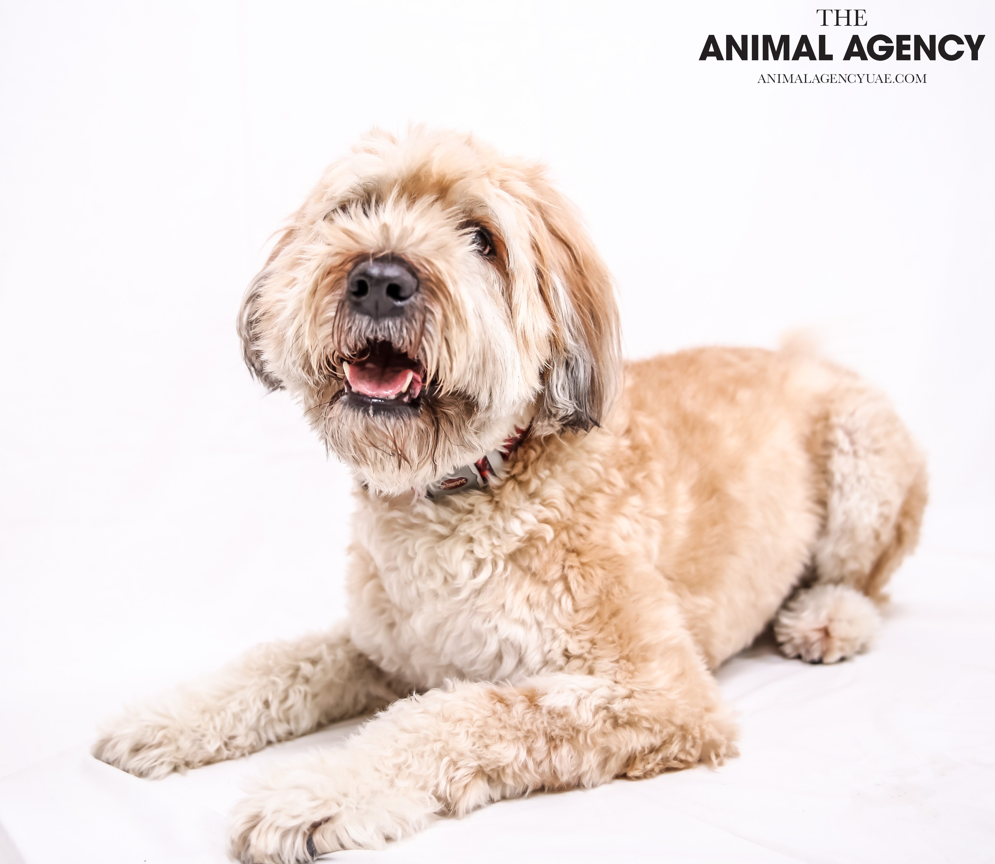 The Animal Agency UAE_Dog_Remy (3).jpg