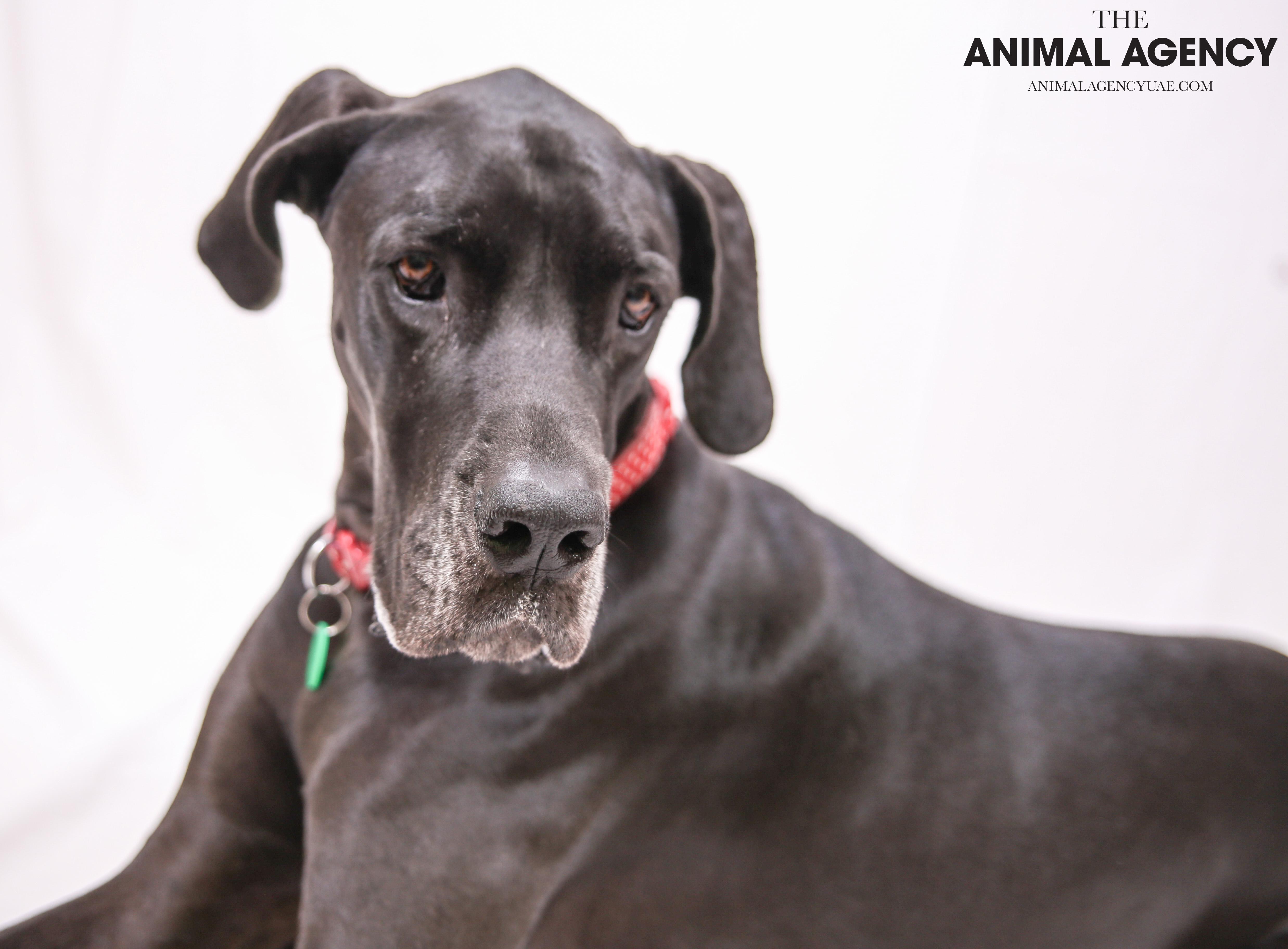 The Animal Agency UAE_Dog_Minnie (3).jpg
