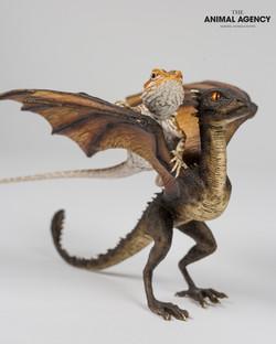 Tyrion the Bearded Dragon