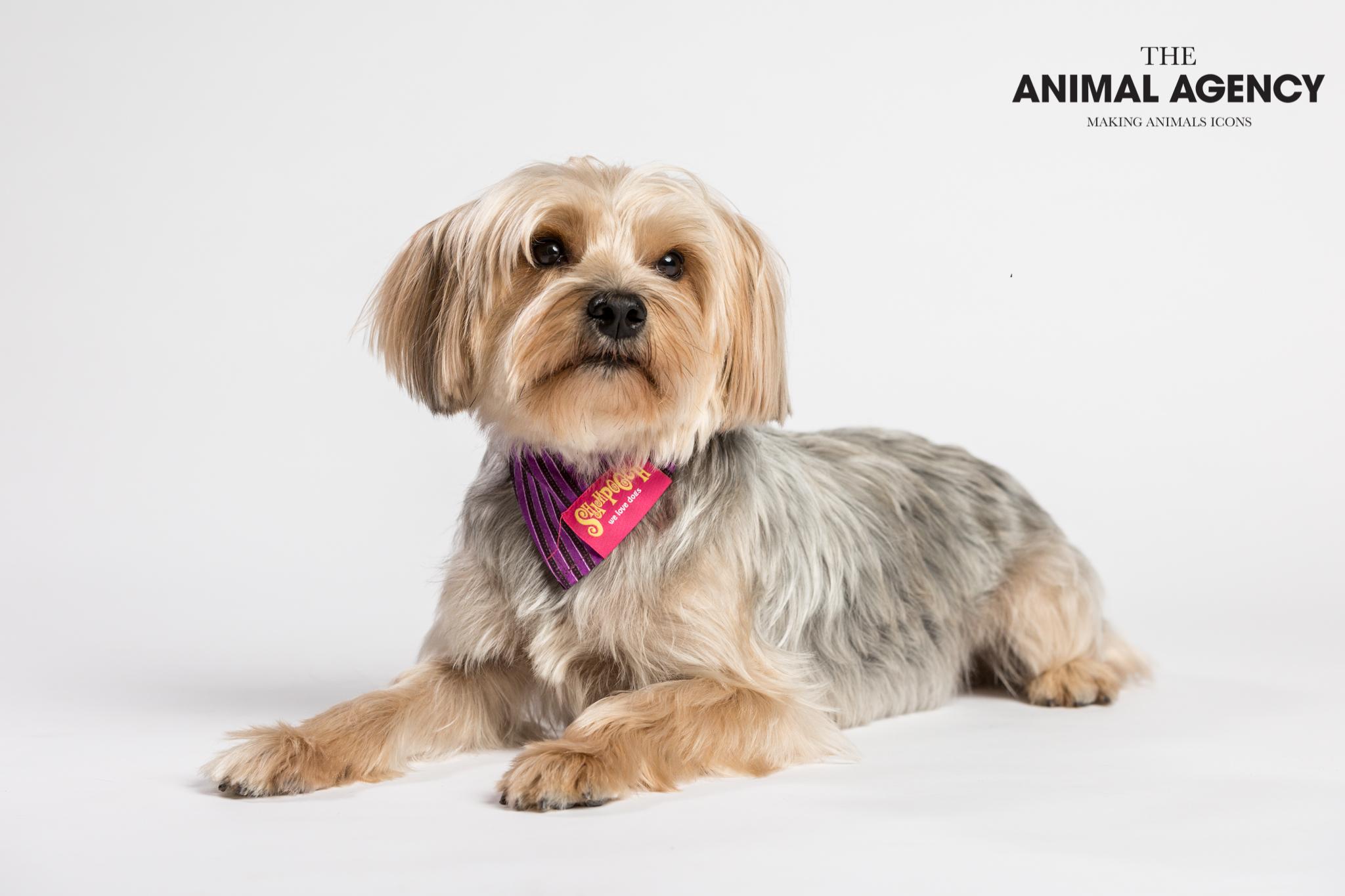 Animal Agency_Wellington_LR-5635