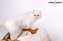 Animal Agency_Max-129.jpg