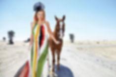 Ventura the Arabian Horse (photo Friday