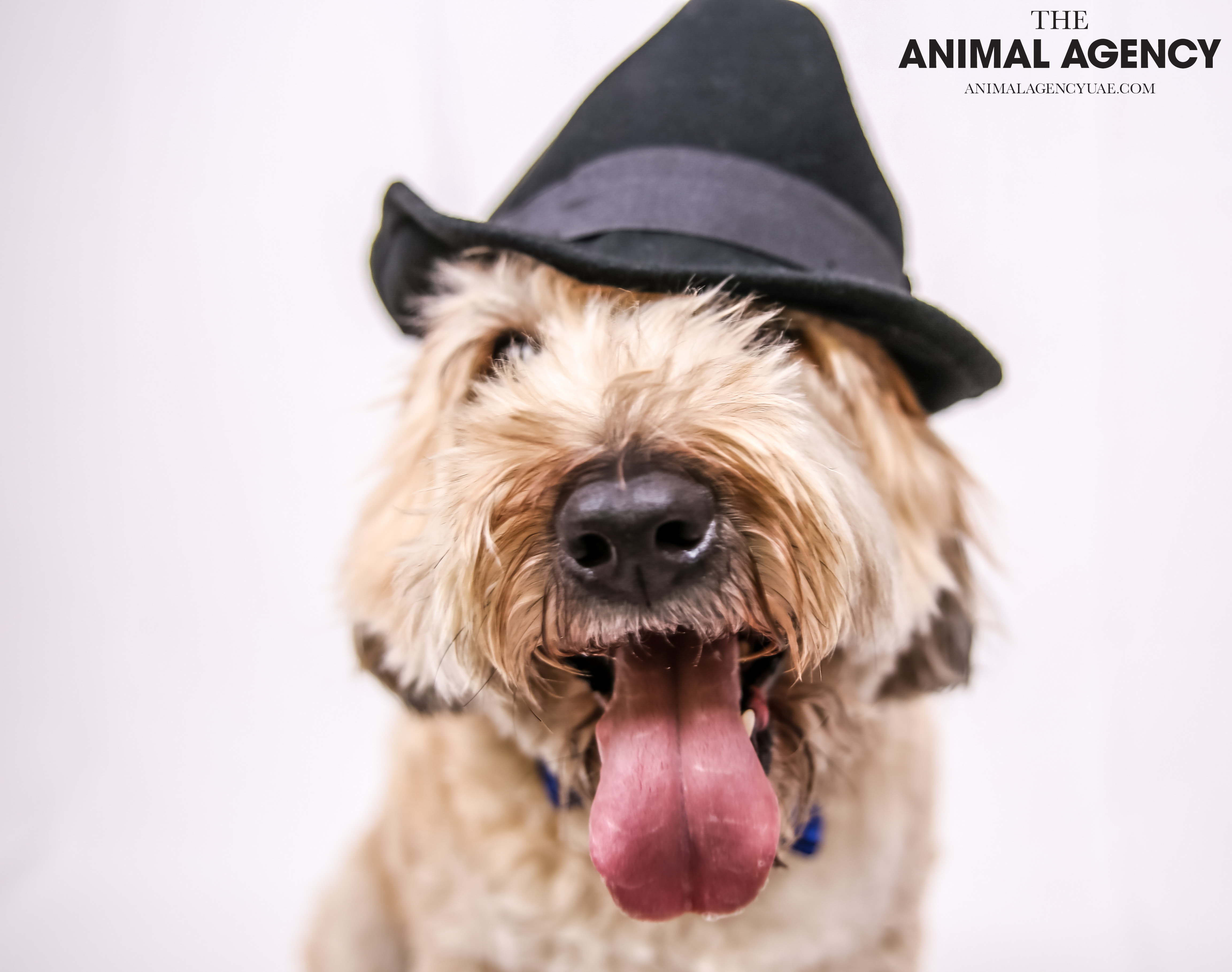 The Animal Agency UAE_Dog_Remy (8).jpg