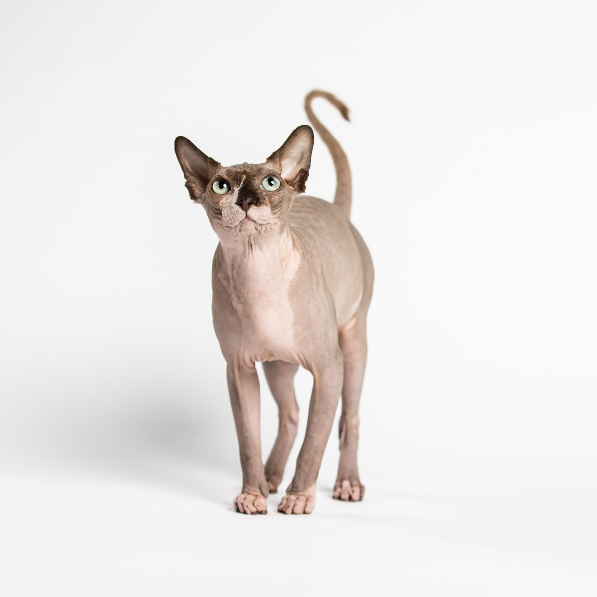 Animal Agency_Skinner_LR-5517