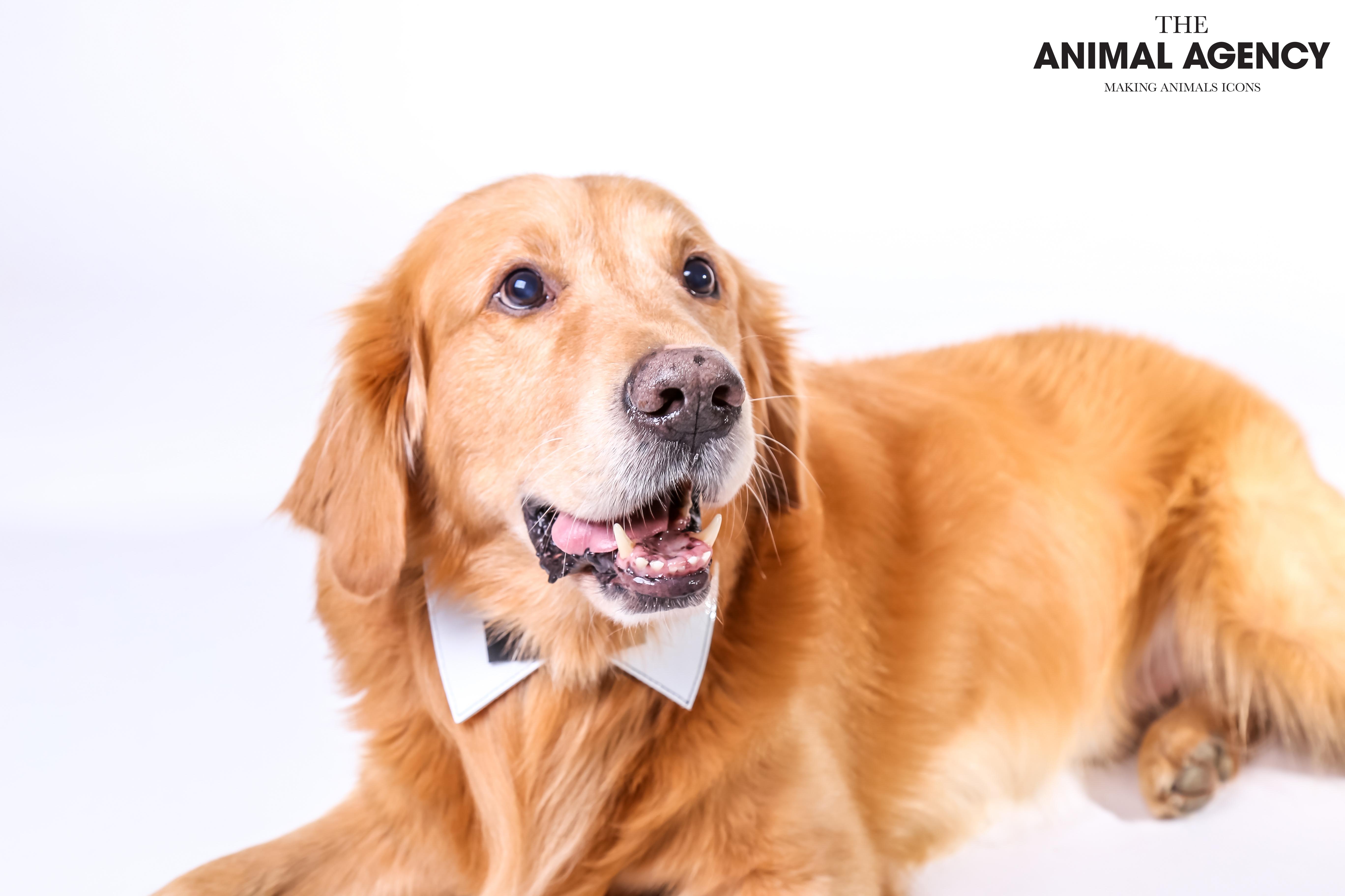 Animal Agency_Bubbly-24.jpg