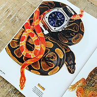 Esquire snakes.JPG