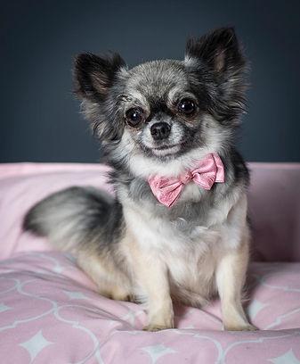 Chihuahua 1.JPG