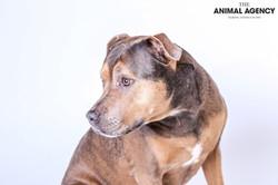 Animal Agency_Lady-6.jpg