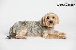 Animal Agency_Wellington_LR-5790