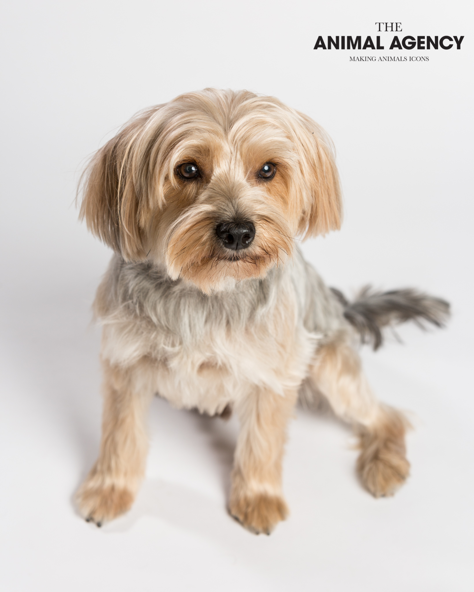 Animal Agency_Wellington_LR-5639