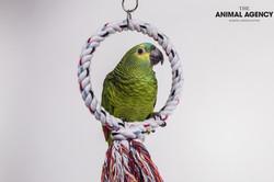Mimi-Parrot