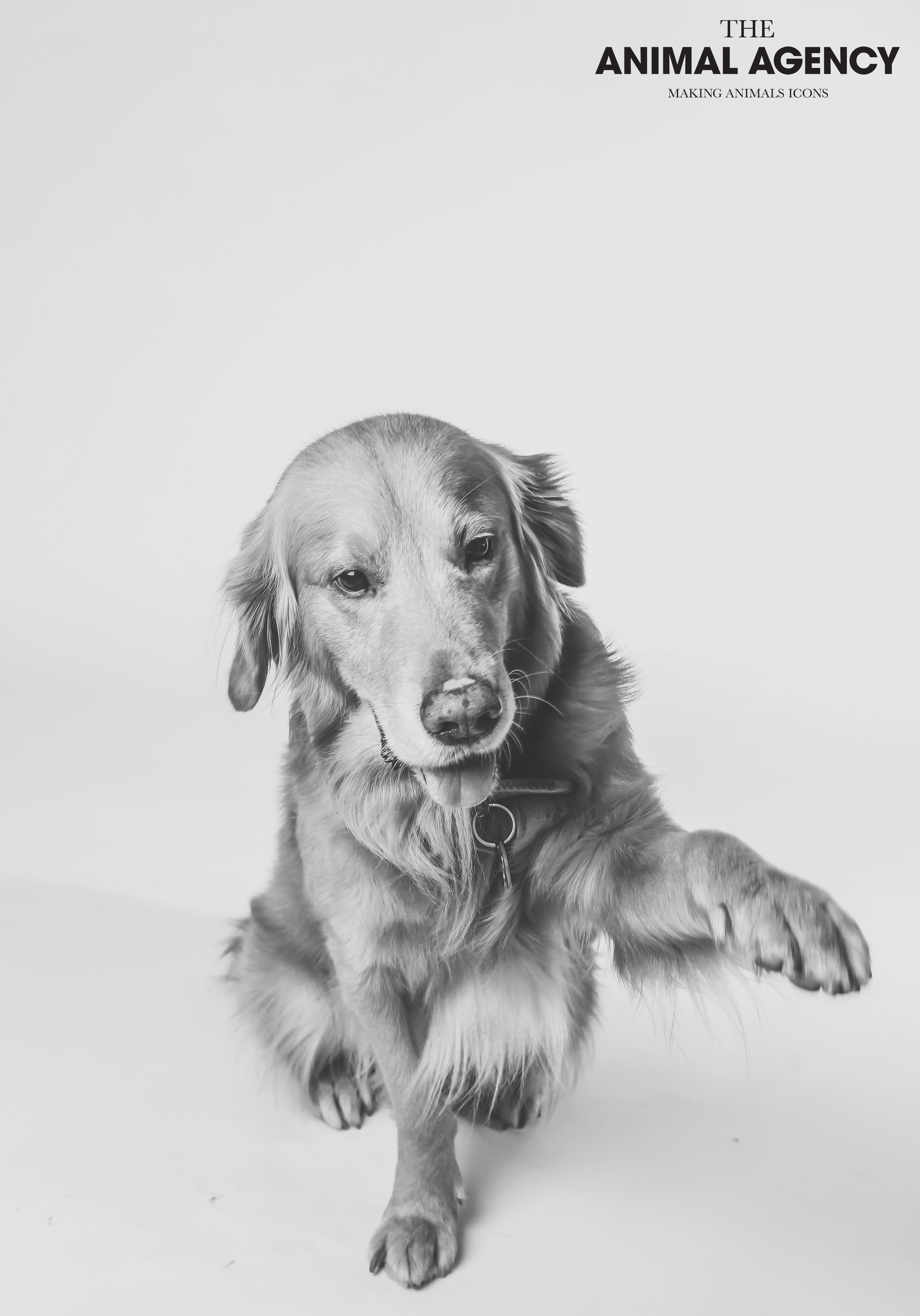 Animal Agency_Bubbly-17.jpg