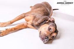 Animal Agency_Lady-37.jpg