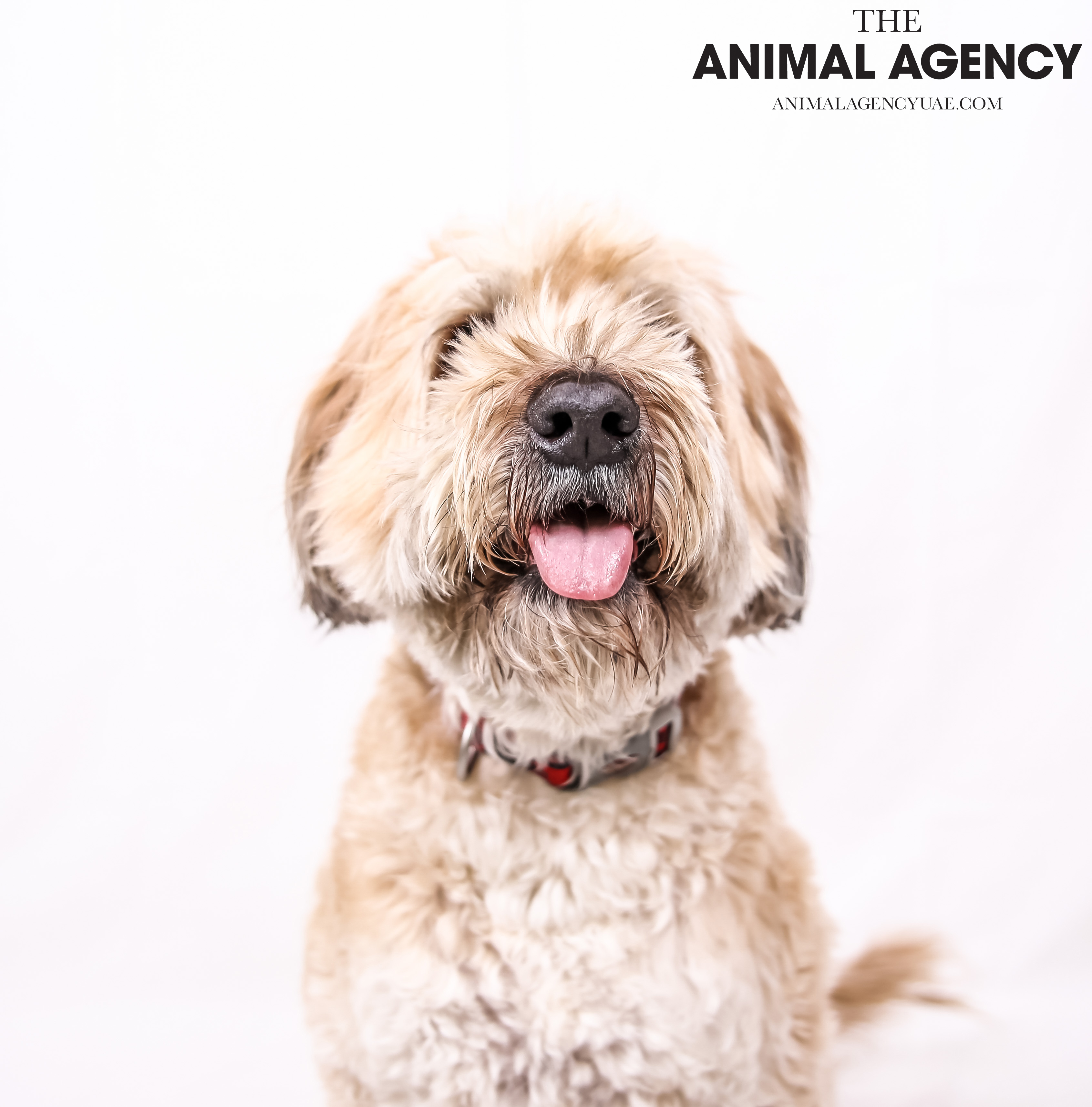 The Animal Agency UAE_Dog_Remy (6).jpg