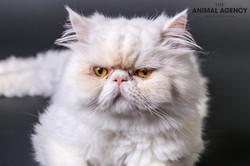 Animal Agency_Max-25.jpg