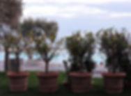 tree-732457_1920.jpg