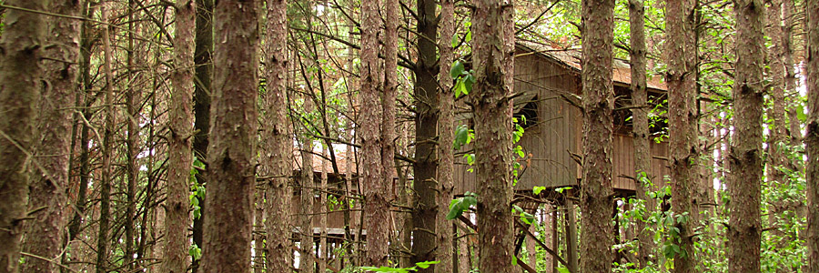 Treehouse Cabins