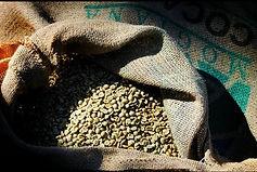 blue oak coffee roasting, green coffee, coffee beans,coffee