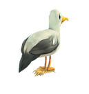 mouette.png