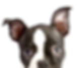 Peeping Puppy