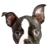 Pet sitter in willow grove