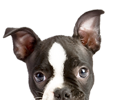 Well trained professional dog walkers double as award winning pet sitters when you need.