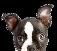 peeping filhote de cachorro