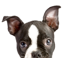 Подглядывание щенок