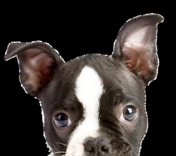 KheironVet - Peeping Puppy