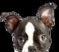 dog-supplement-2.jpg