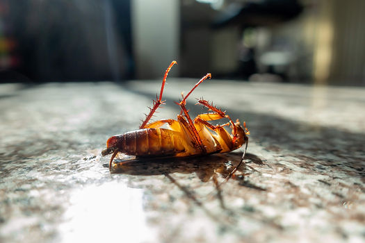 bigstock-Dead-Cockroach-On-Floor-2870572
