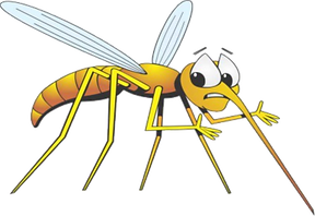 Mosquito%20Cairns_edited.png