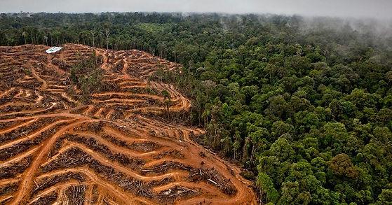 deforestacion-tala-arboles-1.jpg