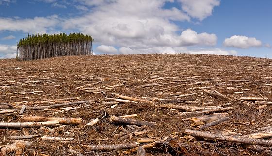 deforestacion-w.png