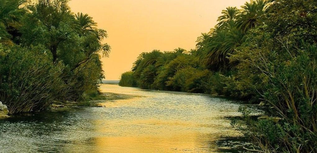 naturaleza-high-resolution-iphone-selva-