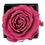 Thumbnail: 1 Eternal Rose - Fuchsia Peps - Black square Box