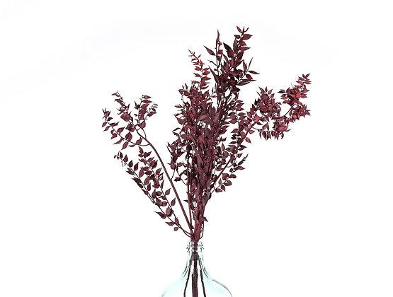 Botte de Fleurs séchées - Ruscus Carmin Intense