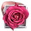 Thumbnail: 1 Eternal Rose - Fuchsia Peps - White square Box