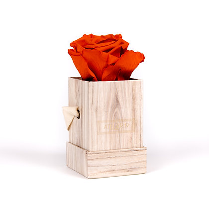 1 Rose Eternelle Orange Vibrant - Box carrée Bois Clair