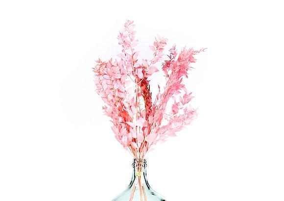 Botte de Fleurs séchées - Ruscus Rose Tendre
