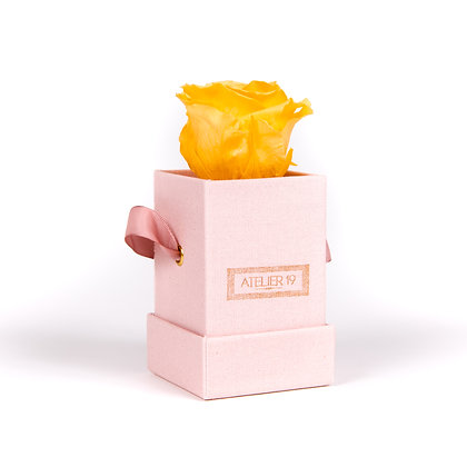 1 Eternal Rose - Velvety Peach - Powder Pink square Box