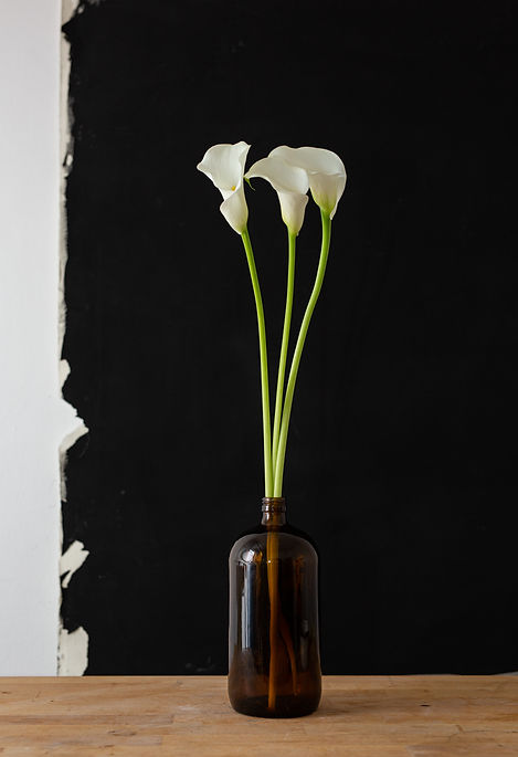 flower calla lily