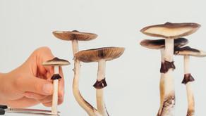 Santa Cruz Decriminalizes Psilocybin Fungi.  Cities in Tennessee Could Never Do This.