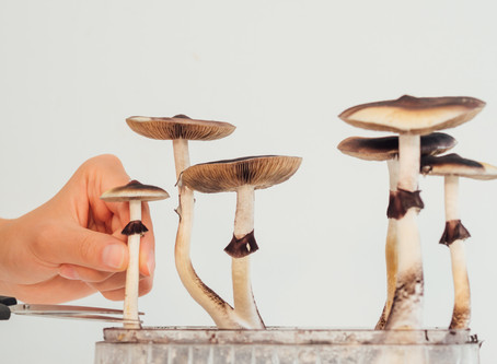 Santa Cruz Decriminalizes Psilocybin Fungi.  Cities in Tennessee Could Never Do This.