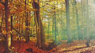 autumn-in-the-midwest-rocky-river-ohio-wallpaper.jpg