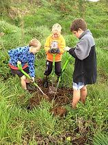 Planting harakeke
